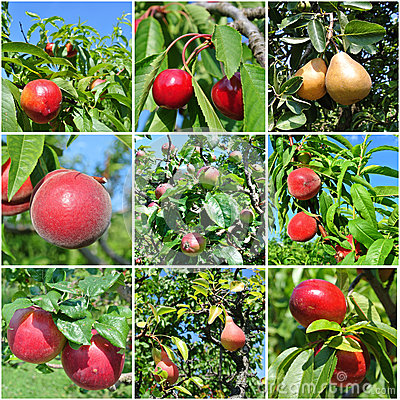 Free Ripe Fruit Collage Royalty Free Stock Photo - 46505465