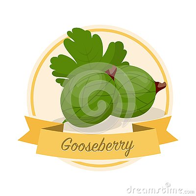 Ripe gooseberries with name vector illustration Vector Illustration