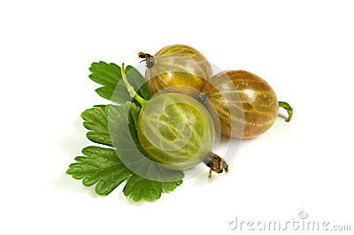 Ripe gooseberry with leaves