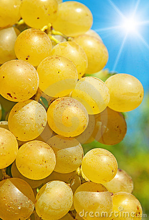 Ripe grape in sunshine