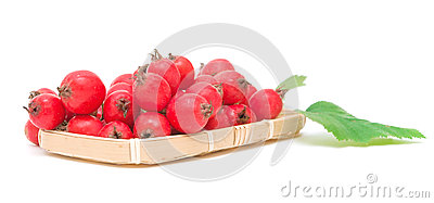 Ripe hawthorn berries on white background