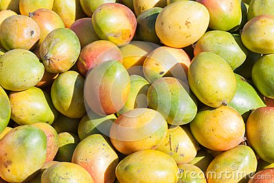 Ripe mangoes ready for sale