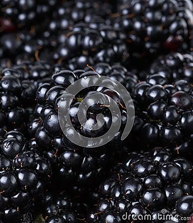Ripe organic blackberries close up