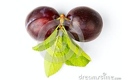 Ripe plum