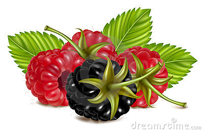 Ripe raspberries and blackberry (dewberry) with gr