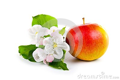 Ripe red apple and apple-tree blossoms