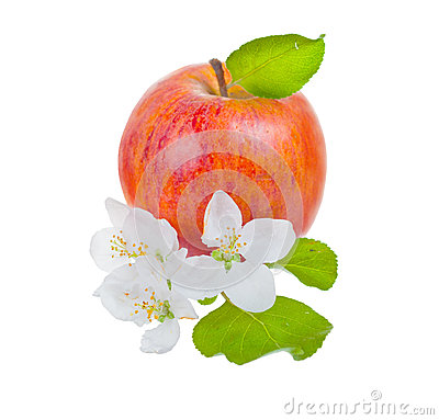 Ripe red apple and apple-tree flowers