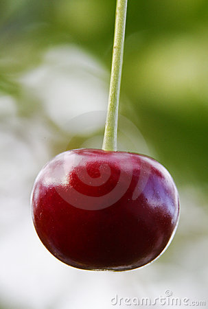 Ripe red cherry