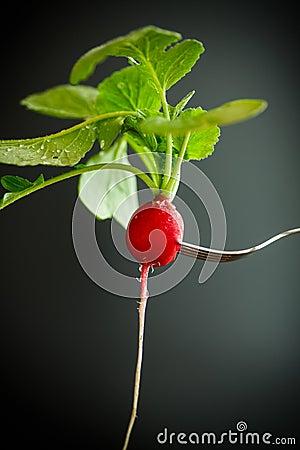 Free Ripe Red Radish With Foliage Stock Image - 91118581