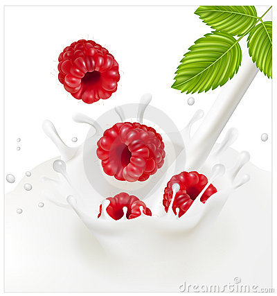Ripe red raspberries falling into the milky splash