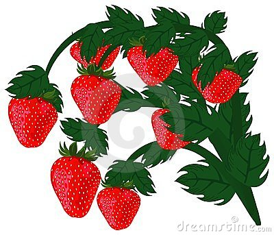 Ripe red strawberries.