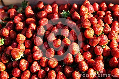 Ripe red strawberries at a farmers market