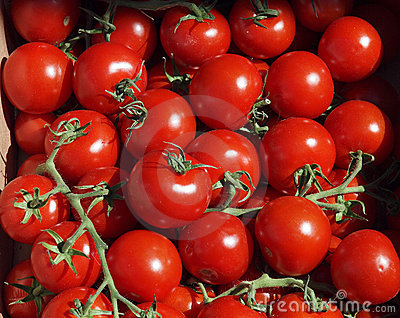 Ripe Red Vine Tomatoes