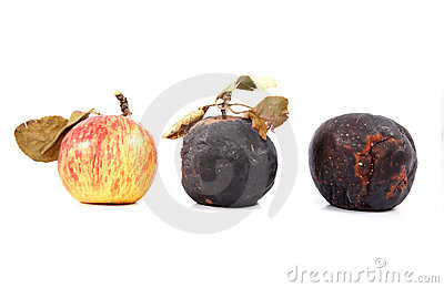 Ripe and rotten apples with dry leave