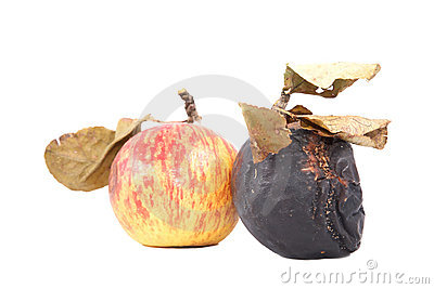 Ripe and rotten apples with dry leaves