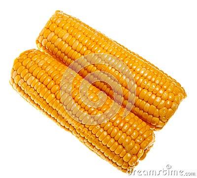 Ripe sweet corn i