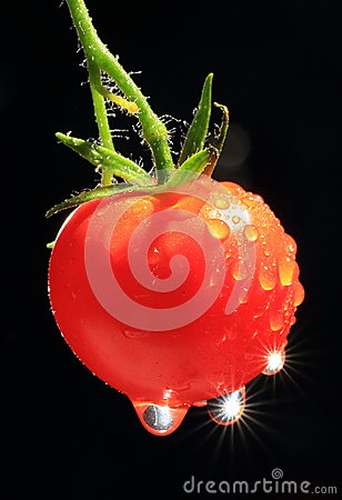 Free Ripe Tomato With Water Drops Stock Image - 25899401