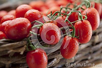 Ripe vine tomatoes