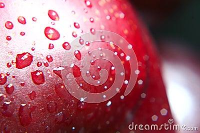 Ripe wet plum