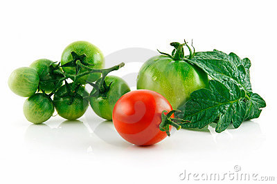 Ripe Wet Red and Green Tomatoes Isolated
