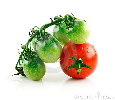 Ripe Wet Red and Green Tomatoes Isolated on White
