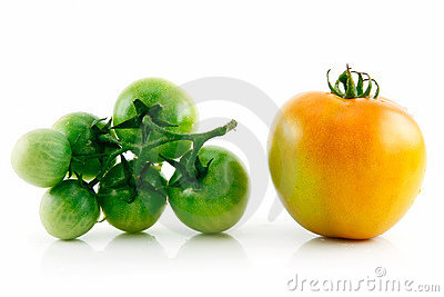 Ripe Wet Yellow and Green Tomatoes Isolated