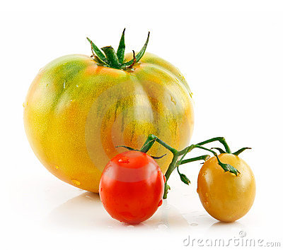 Ripe Wet Yellow and Red Tomatoes Isolated on White