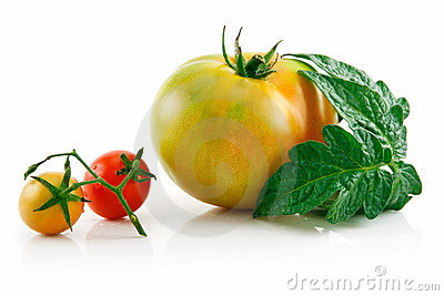 Ripe Wet Yellow and Red Tomatoes with Leaves