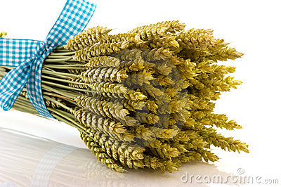 Ripe wheat with checked ribbon