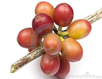 Ripen coffee beans