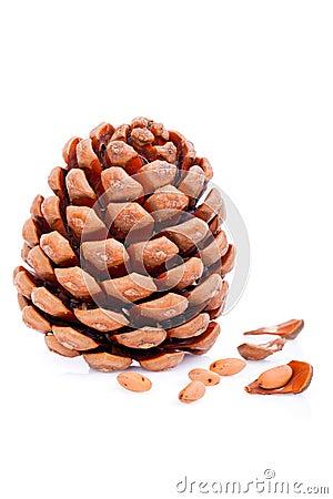 Ripened cone