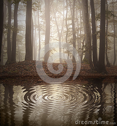 Ripple on lake in a forest with fog