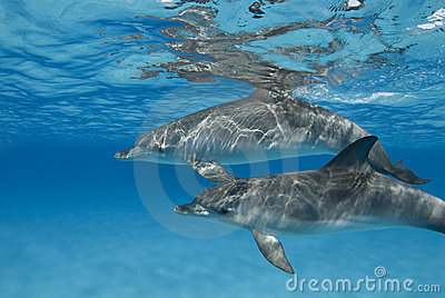 Rippled Dolphin Pair