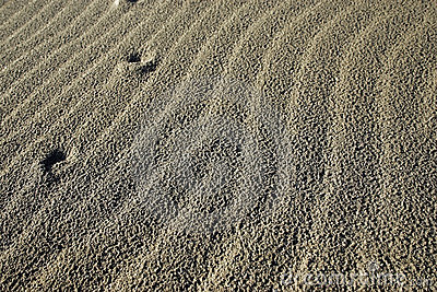 Ripples in dry sand