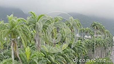 Riprese aeree invertite di palme in giardino botanico di Rio de Janeiro archivi video
