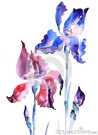 íris violeta