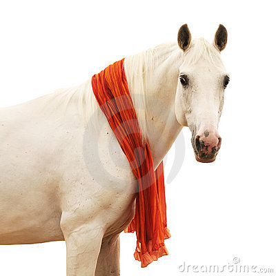 Ritratto del cavallo bianco isolato su bianco