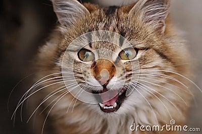 Ritratto del gatto sorpreso immagine stock libera da - Immagine del gatto a colori ...