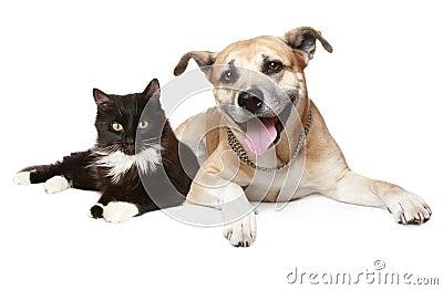 Ritratto di un gatto e di un cane