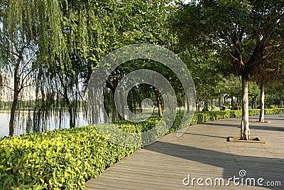 Riva del lago