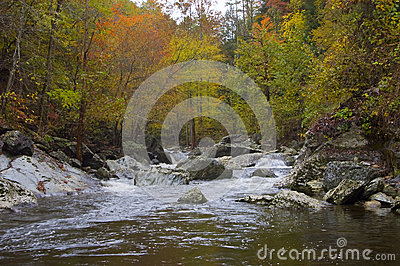 River Through Autumn Forest