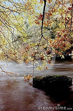 Free River Autumn Trees Royalty Free Stock Photo - 1592305