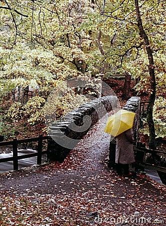 Free River Autumn Trees Stock Photos - 1592353