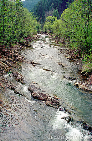 River in carpathian