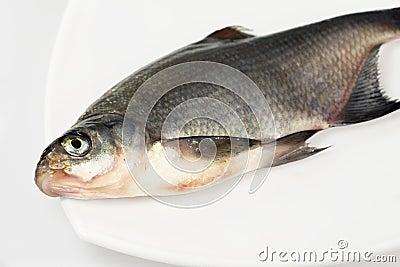 River fish bream