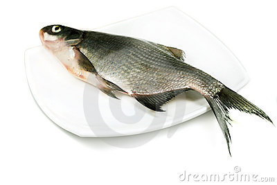 River fish bream