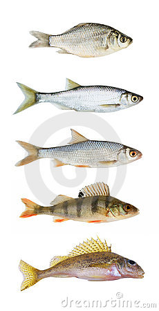 River fish collection isolated