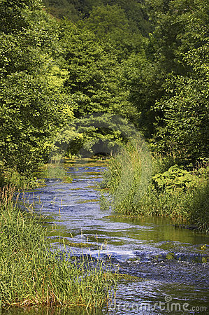 River flowing through tree lined route