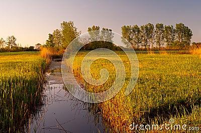 River that flows through the swamp