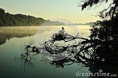 River foggy morning